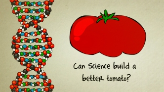 Genetically-Modified-Organism